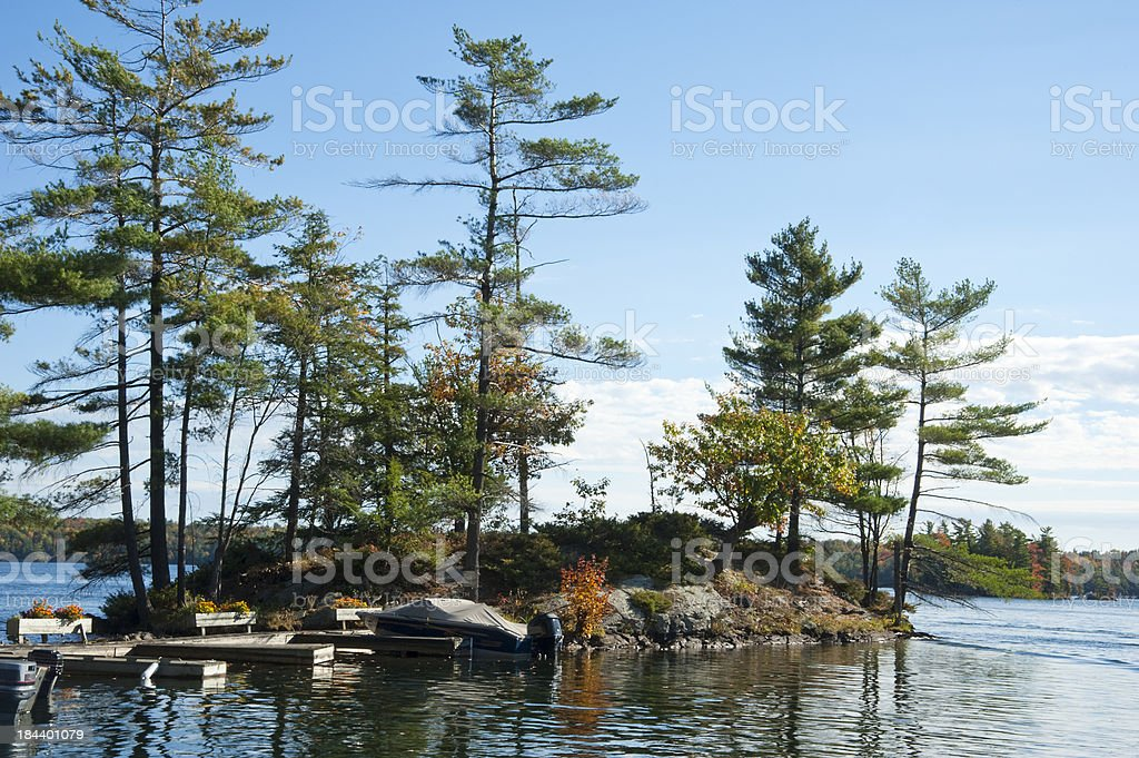 Tall Pines royalty-free stock photo