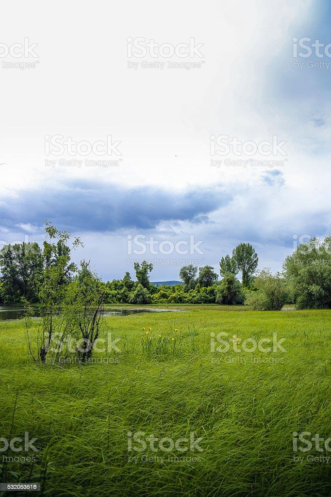 Tall prairie high grass bends in Summer breeze stock photo