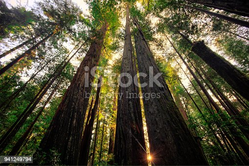 Taken in Redwoods National & State Parks, California