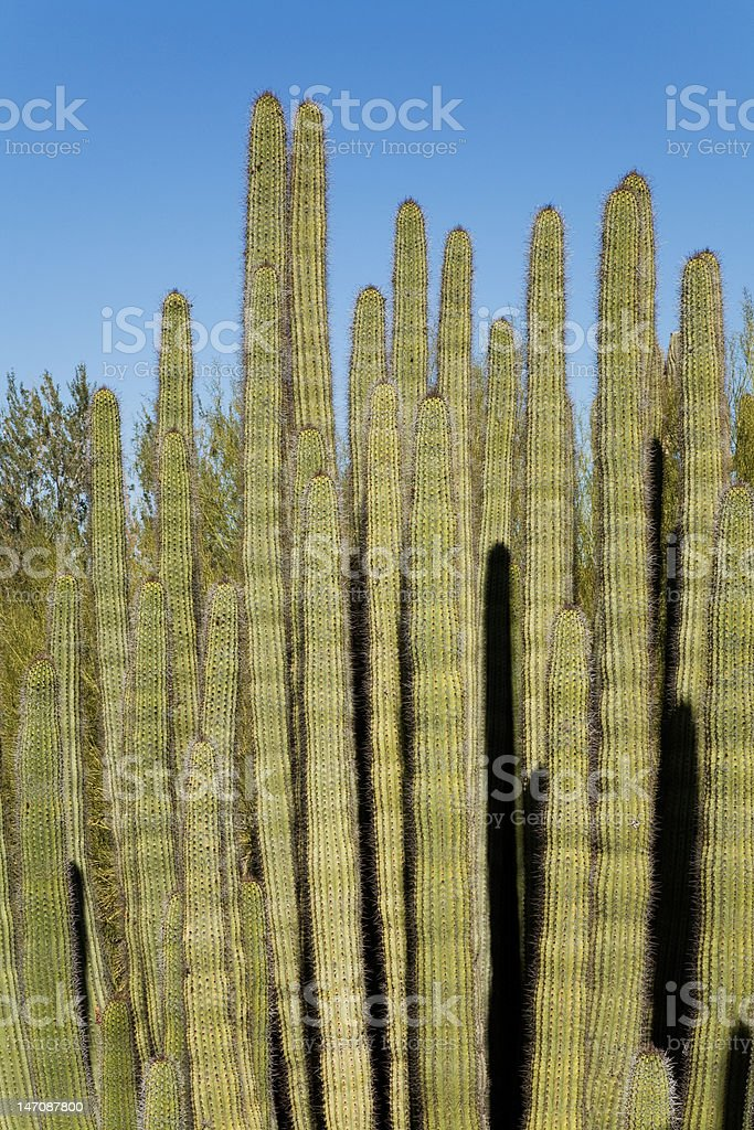Tall, slender cactus stock photo