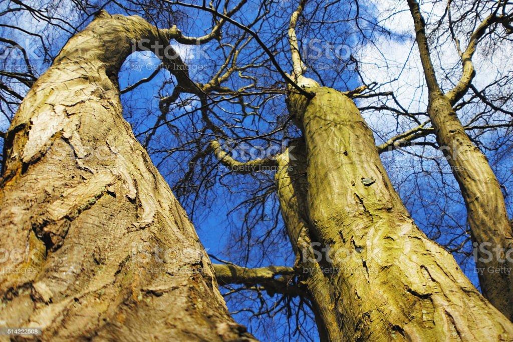 Tall tree and blue sky stock photo