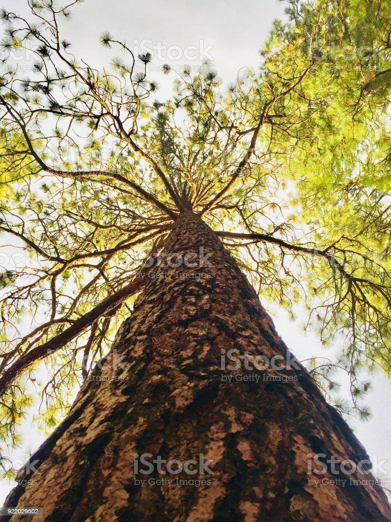 Großer Baum Zweige abstrakten Hintergrund – Foto