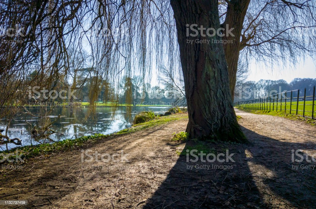 Tall tree casts a long shadow by a river stock photo