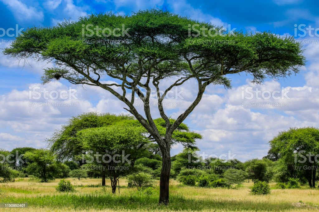 A tall tree dominates the landscape, bright with blue and green