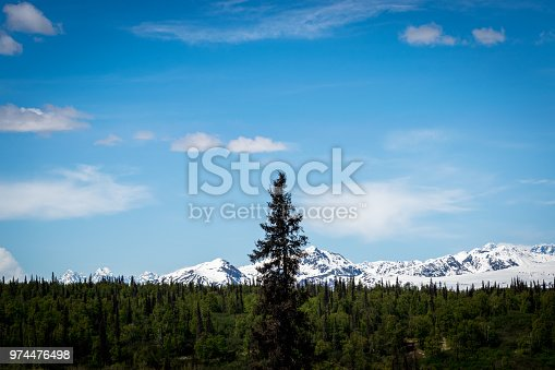 istock Tall tree in the forest 974476498
