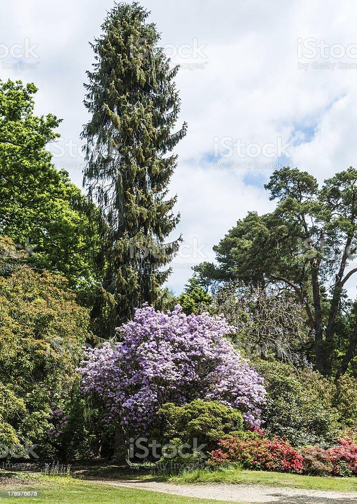 Tall Tree stock photo