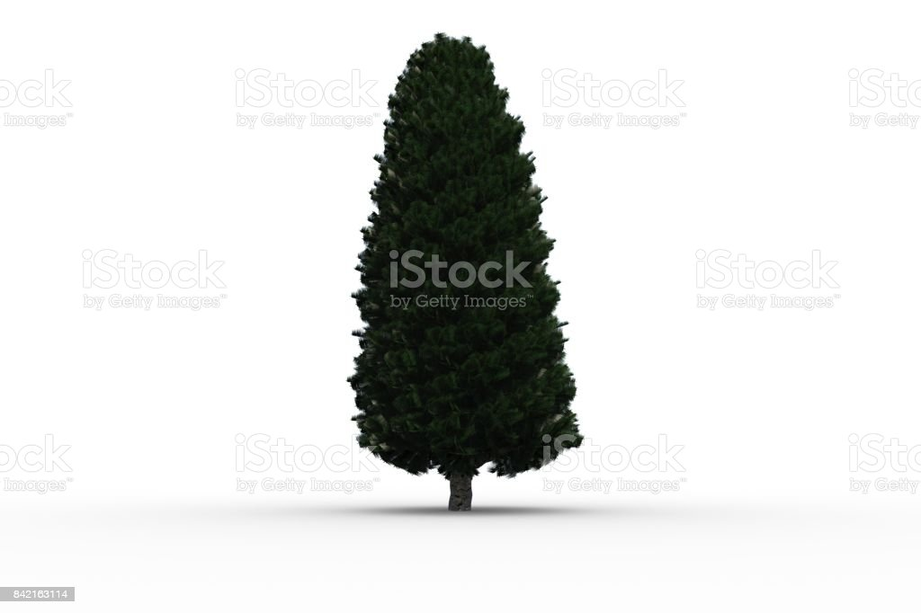 Tall tree with green foilage stock photo