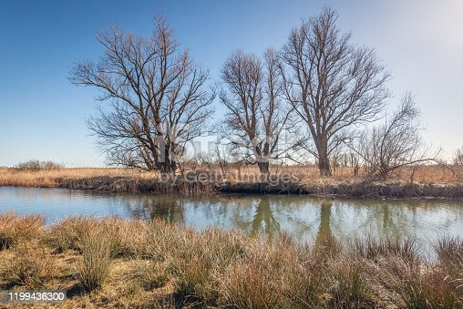 Backlight image of bare branches or trees silhouetted against the blue sky. It is still winter and the other vegetation is dry and brown. The photo was taken in the Dutch National Park Biesbosch.