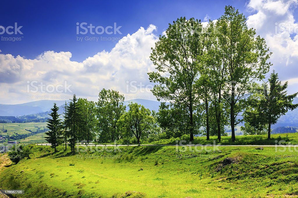 tall trees near highway royalty-free stock photo