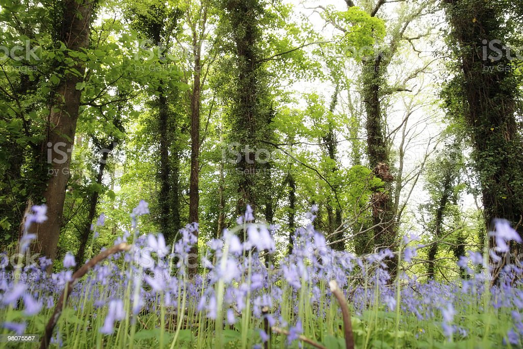 Alberi alto foto stock royalty-free