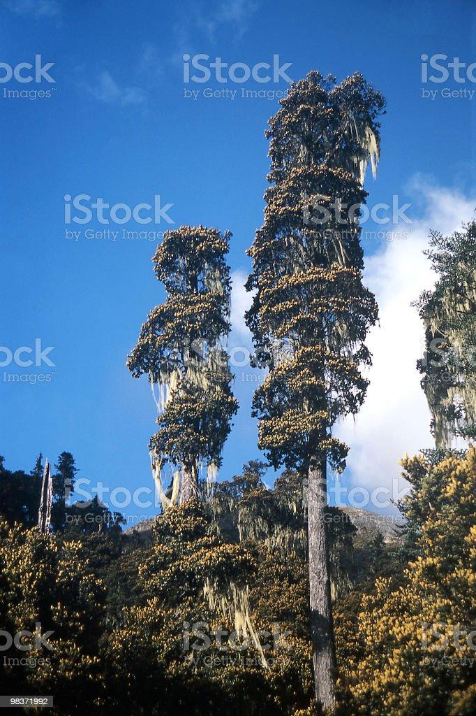 키 큰 나무들 royalty-free 스톡 사진