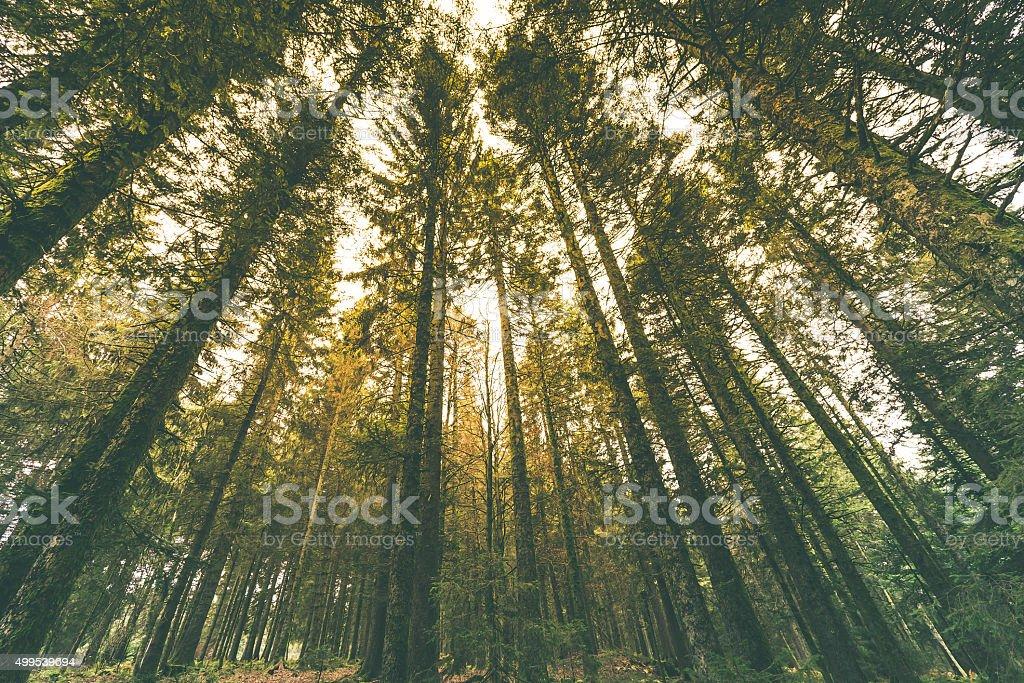 Tall Trees under bright sunlight stock photo