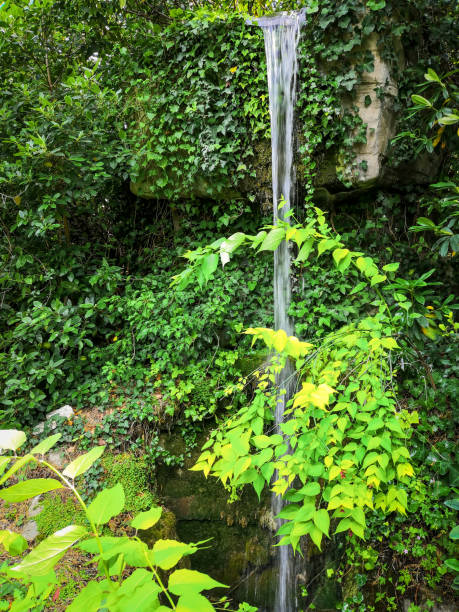 Tall waterfall in a woodland stock photo