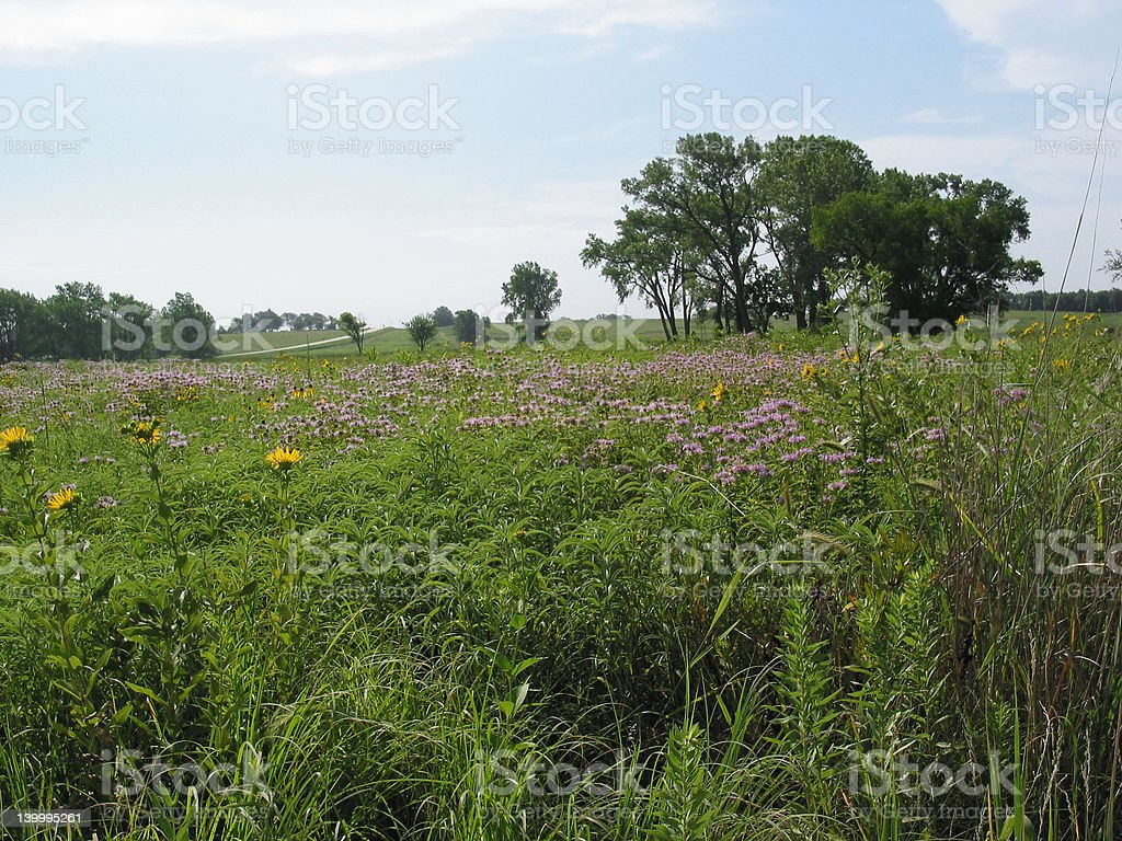 Tallgrass Prairie at Homestead National Monument royalty-free stock photo