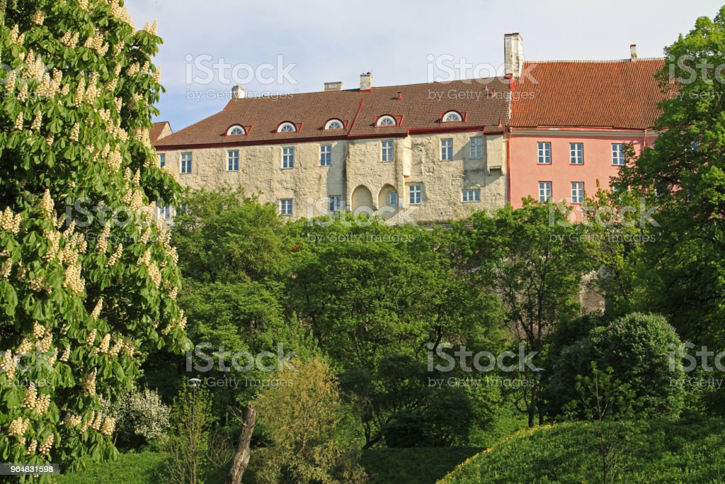 Tallinn, Estonia Toompea upper town view. Sunny day, summer park, trees, green grass, blossoming chestnut, historical buildings, Europe tourist attractions. royalty-free stock photo