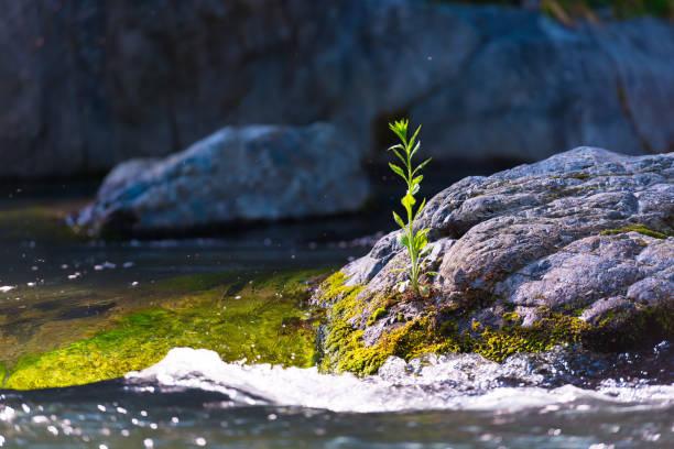 la rivière tama, dans la vallée de hatonosu, okutama, tokyo, japon - source naturelle photos et images de collection