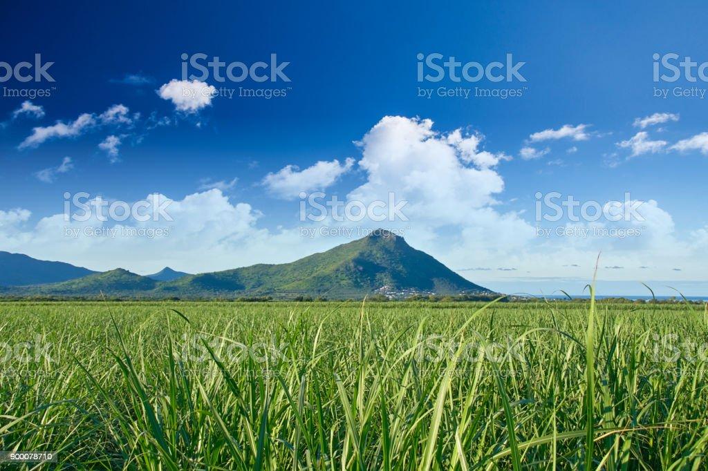 Tamarin Mountain Mauritius stock photo