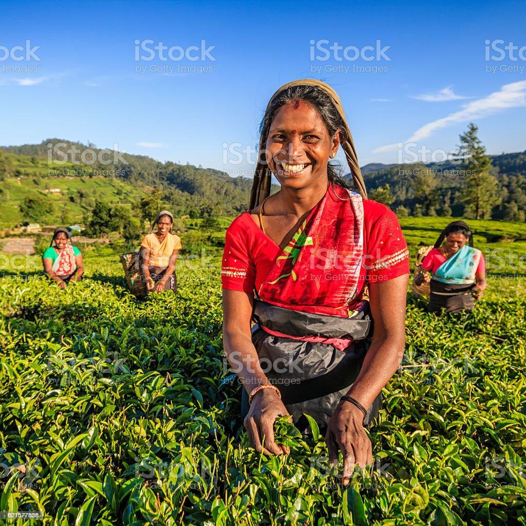 Tamil femmes plucking feuilles de thé de Ceylan à plantation, photo libre de droits