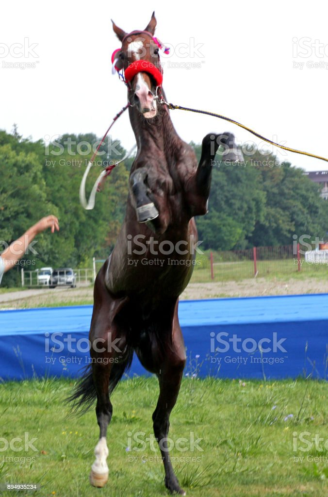 Taming of Horse stock photo