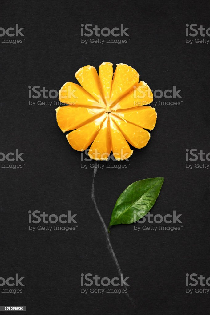 Tangerine in bloom. royalty-free stock photo