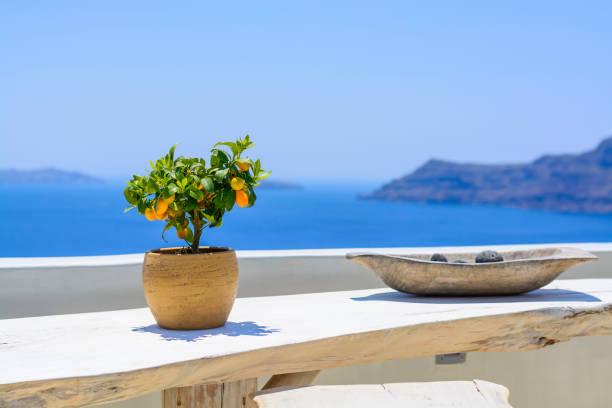 Mandarinen Baum im alten Tontopf auf Hintergrund blaue Meer. Zitronenbaum auf weißer Holztisch vor dem Hintergrund der Vulkan von Santorini. Reisekonzept – Foto