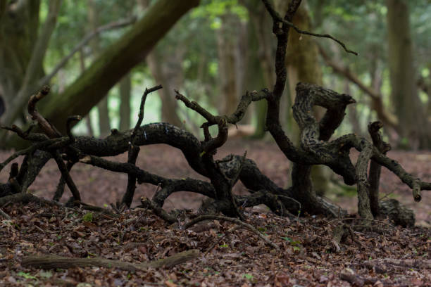 A tangle of branches on the forest floor stock photo