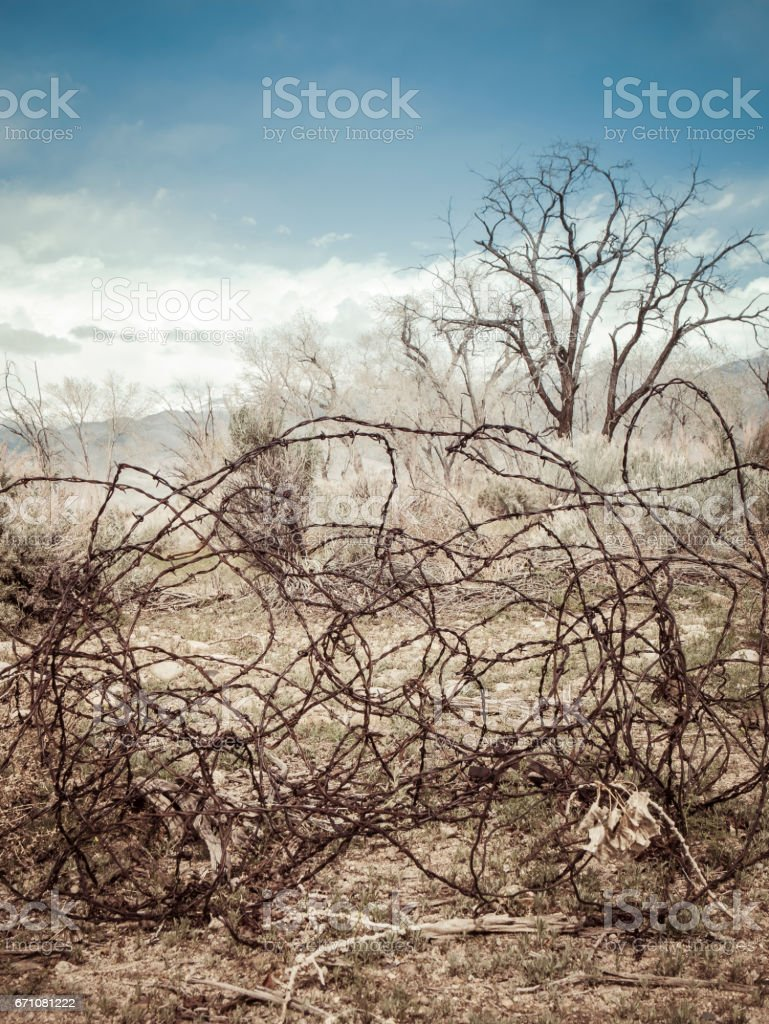 Tangled barbed wire in the west stock photo