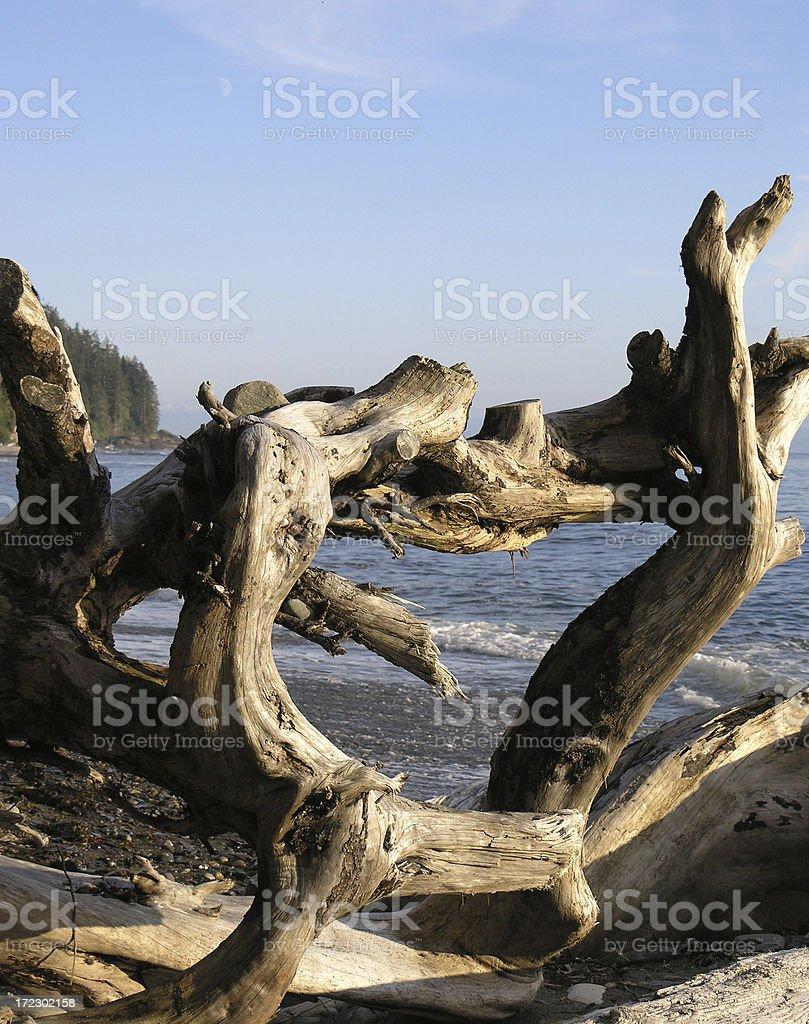 Tangled Driftwood royalty-free stock photo