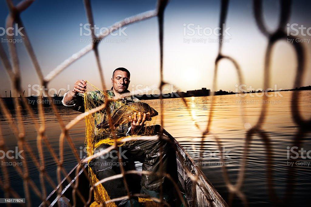 Tangled Fish royalty-free stock photo
