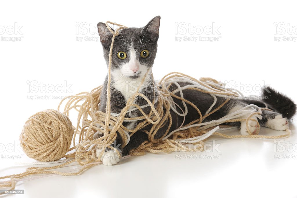 Tangled-Up Kitty stock photo