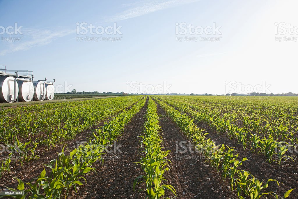 Tanks by field under blue sky royalty-free stock photo