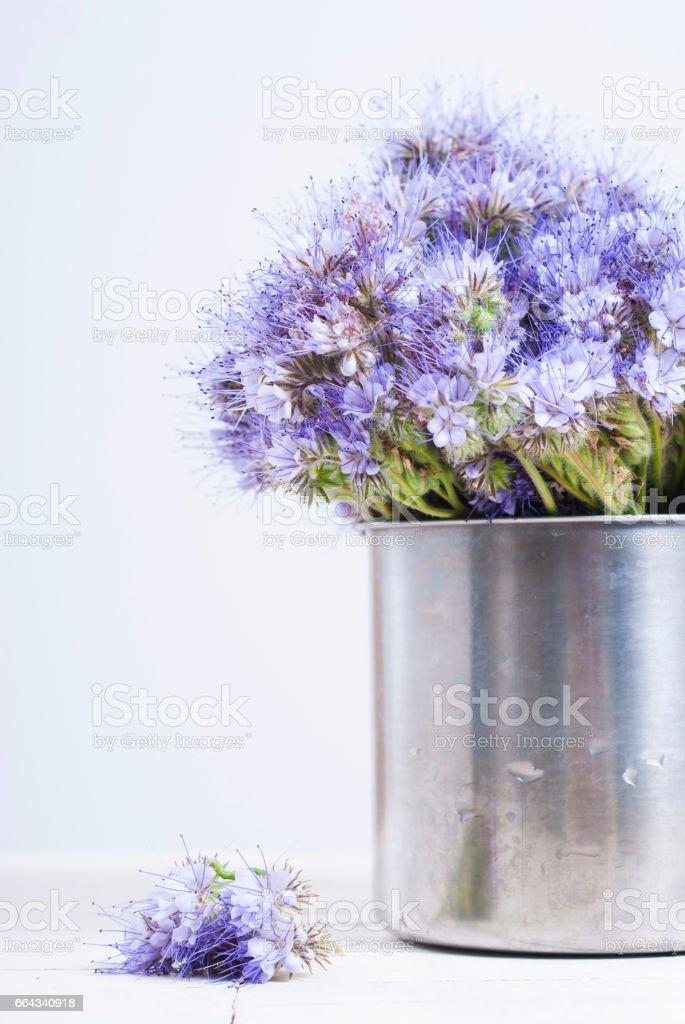 Tansy at tin mug stock photo
