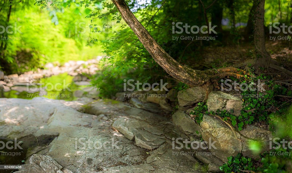Tanyard Creek Park stock photo