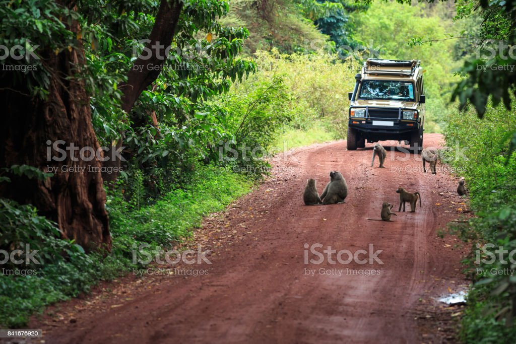 Tanzanie Safari stock photo