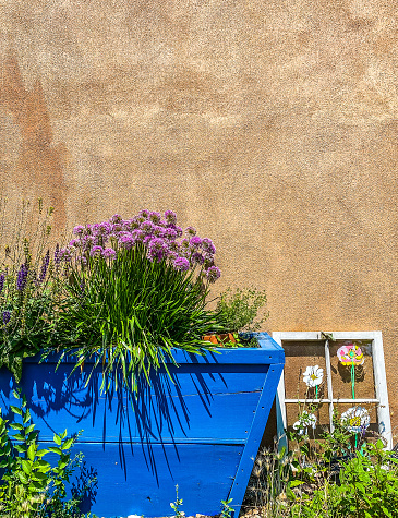 A garden in Taos, New Mexico