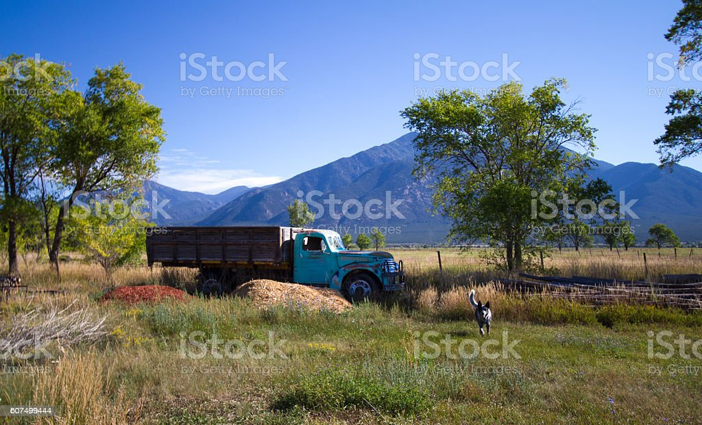 Taos, NM: Old Blue Truck, Running Dog, Field, Taos Mountains stock photo