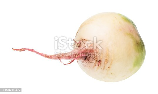 taproot of fresh watermelon radish isolated on white background