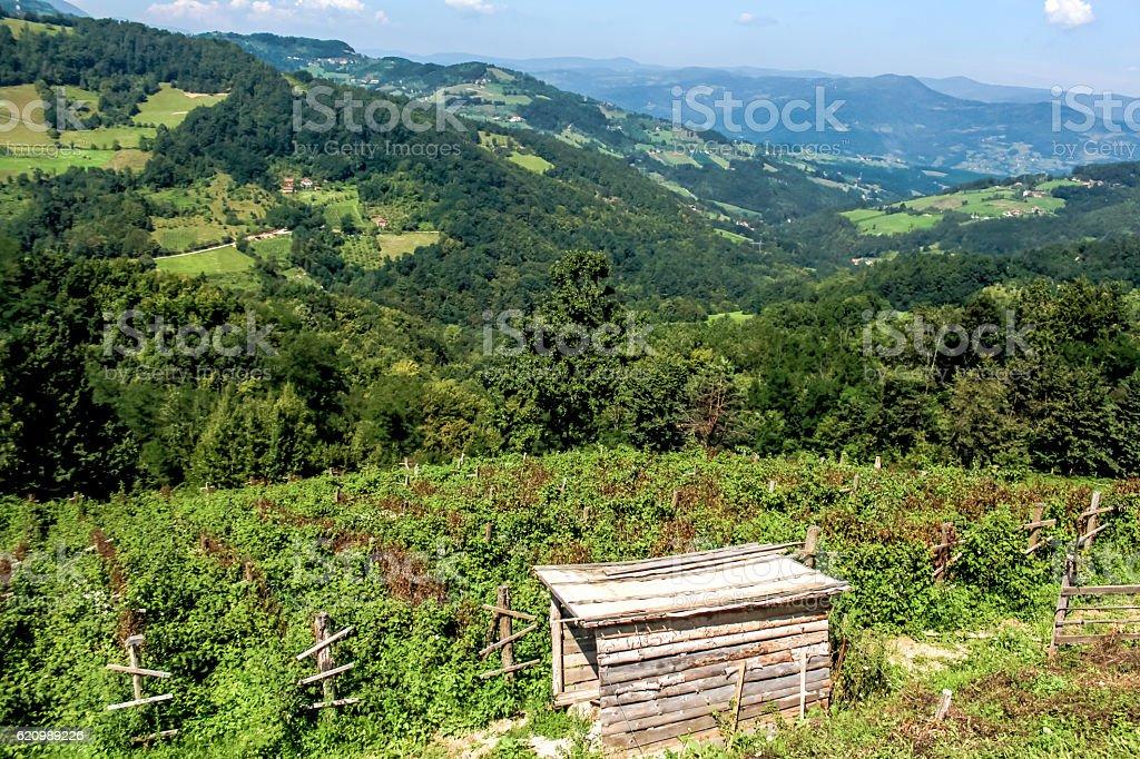 Tara mountain landscape, Serbia foto royalty-free