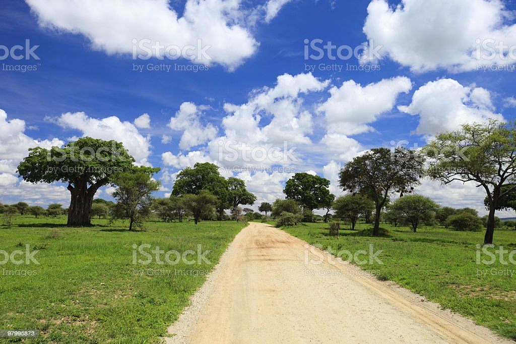 Tarangire national park royalty-free stock photo