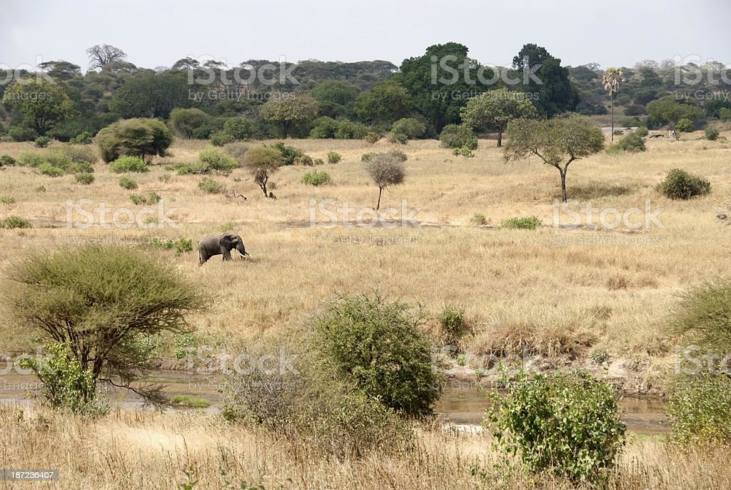 Tarangire Wildlife royalty-free stock photo