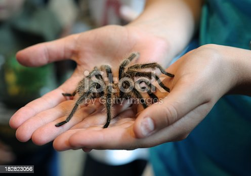 a girl holding a large tarantula in her hands