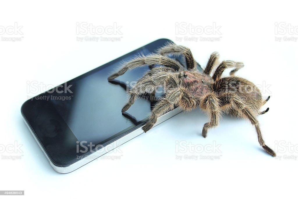 Tarantula spider on mobile phone / smartphone, looking at WorldWide WEB stock photo