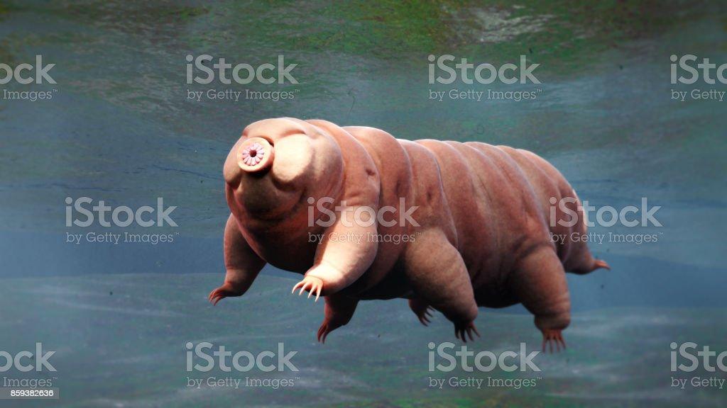 tardigrade, swimming water bear stock photo