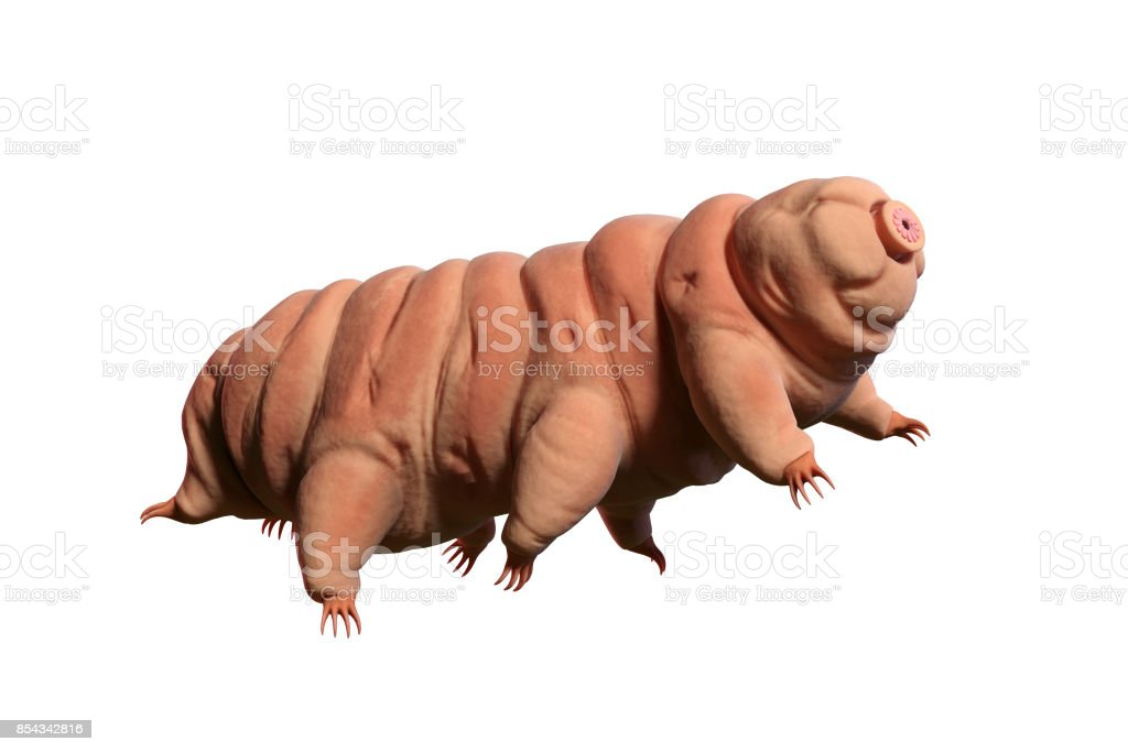 tardigrade, water bear isolated on white background, 3d illustration stock photo