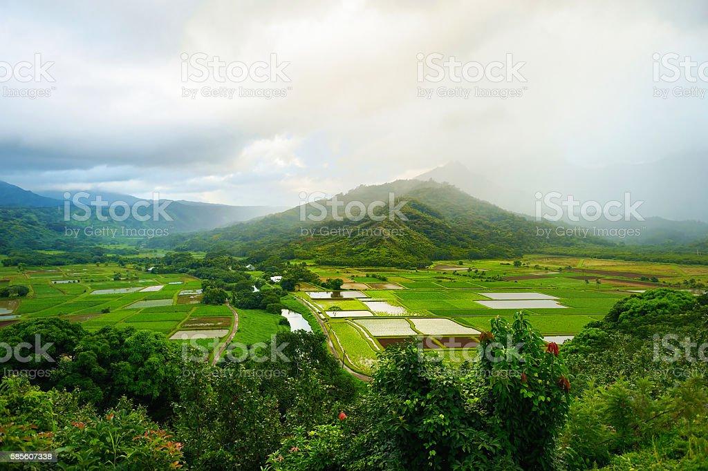 Taro fields in beautiful Hanalei Valley stock photo