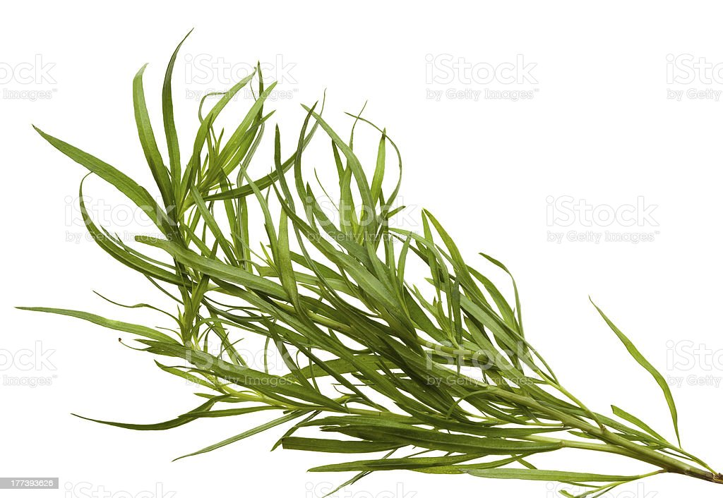 Tarragon bunch royalty-free stock photo