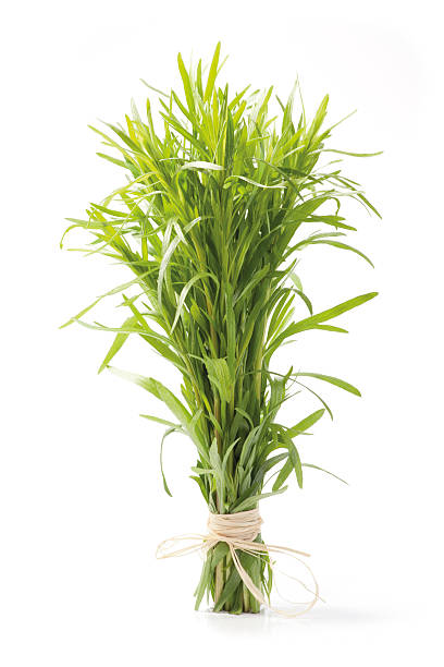 tarragon herb bunch - tarragon stock photos and pictures