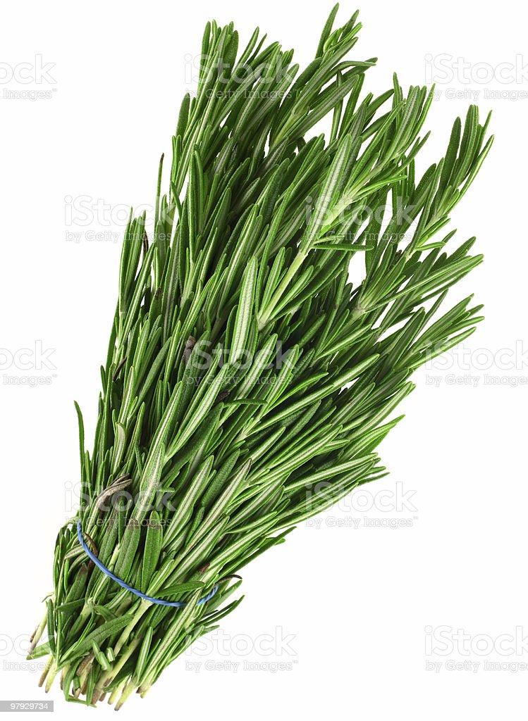 Tarragon herb royalty-free stock photo