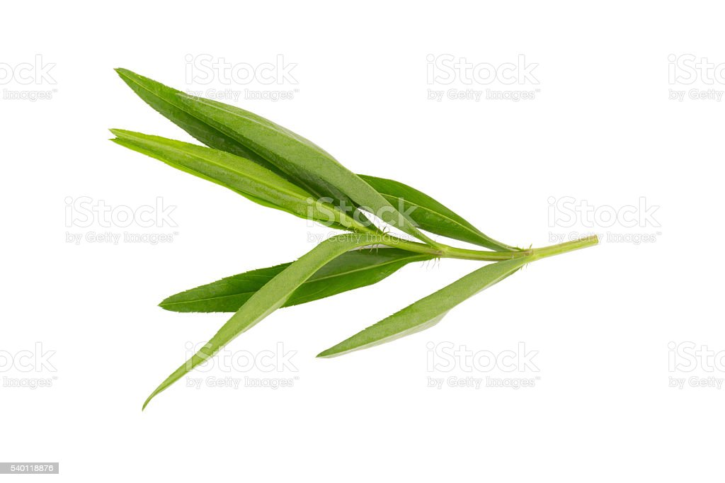 Tarragon herbs close up isolated on white stock photo