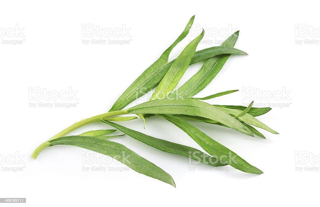 Tarragon herbs on a white background stock photo